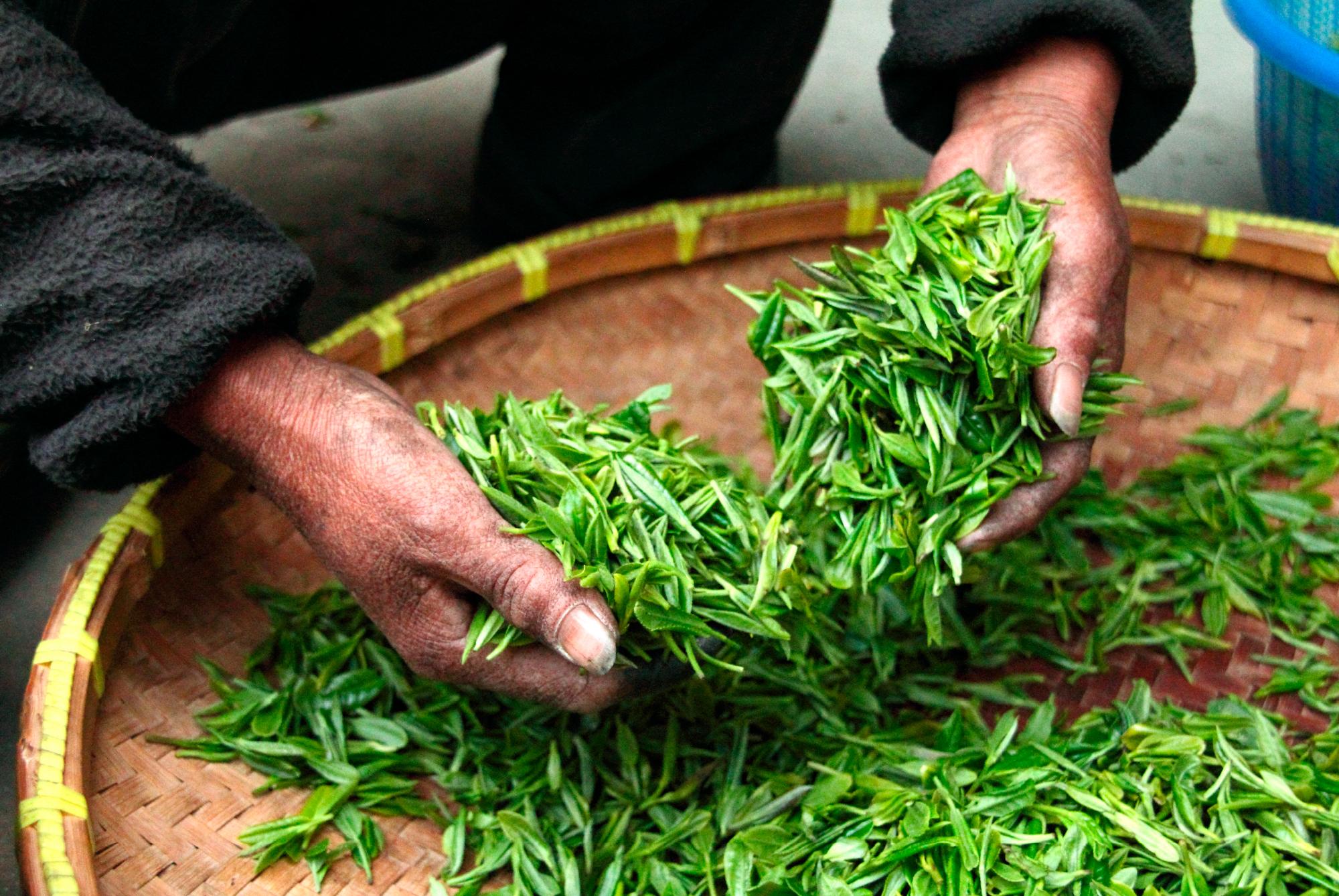 Grønn te Photo