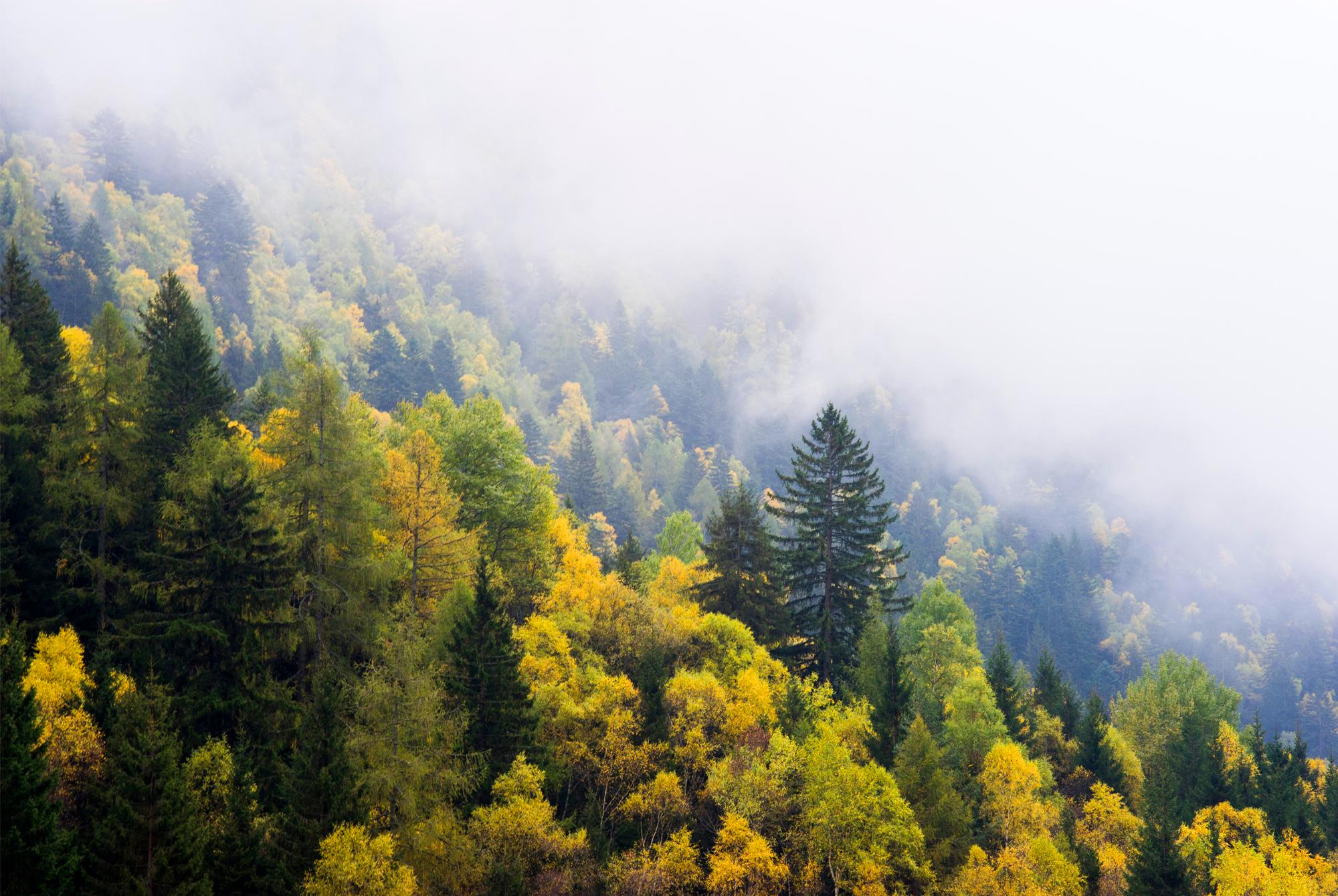 Nidar Vill - Forest